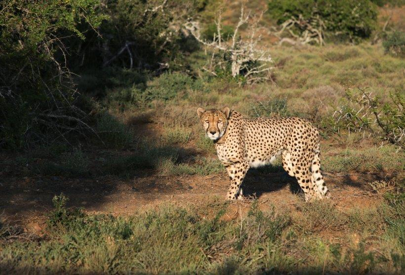 Wild female released into protected conservation.