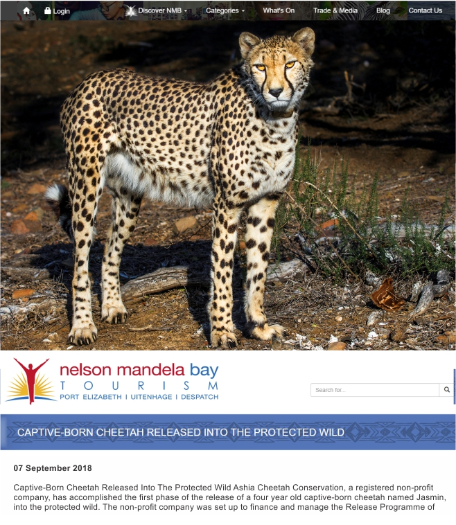 Ashia Cheetah Conservation_Nelson Mandela Bay Tourism_Sept 2018