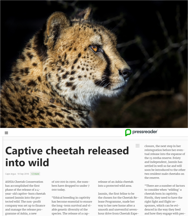 Ashia Cheetah Conservation_Pressreader_10 Sep 2018