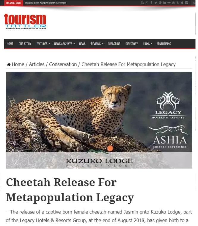 Ashia Cheetah Conservation_TourismTattler_cheetah-release-for-metapopulation-legacy