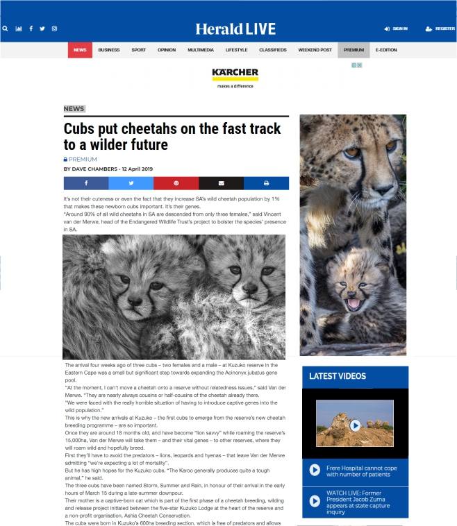 Ashia_Cheetah_Conservation_Herlad_cubs_put_cheetahs_on_the_fast_track_to_a_wilder_future