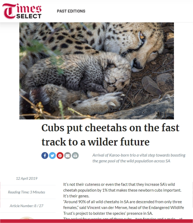 Ashia_Cheetah_Conservation_Time Select_cubs_put_cheetahs_on_the_fast_track_to_a_wilder_future