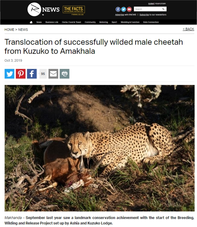 Rnews_translocation_of_successfully_wilded_male_cheetah
