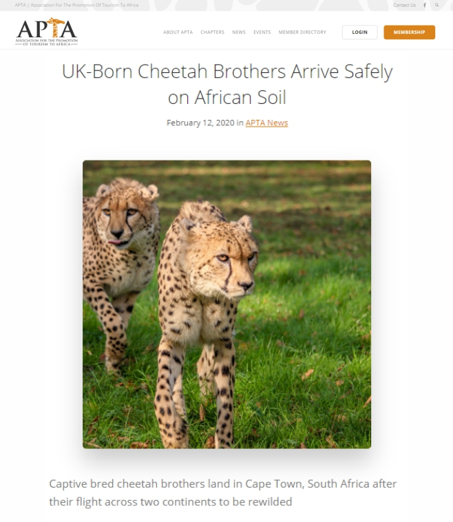 APTA-UK-Born-Cheetah-Brothers-Arrive-Safely-on-African-Soil-Ashia-12-Feb-2020
