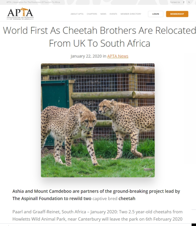 APTA-World-First-Cheetah-Brother-Relocated-From-UK-to-SA-Ashia-22-Jan-2020