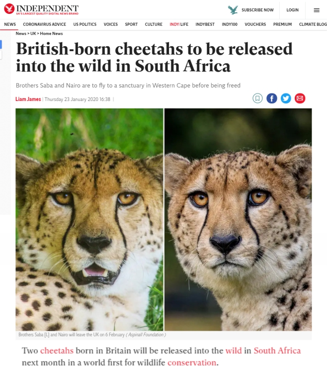 Independent-British-bor-chetetahs-to-be-released-into-the-wild-in-SA-Ashia-23-Jan-2020