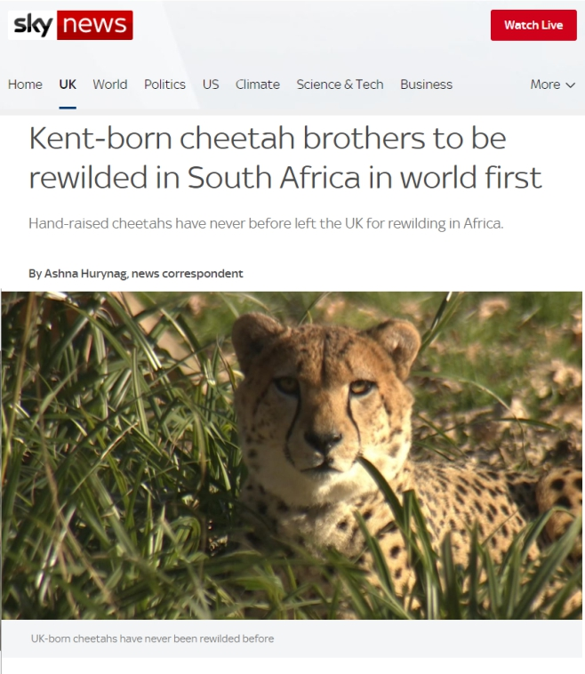 Sky-News-Kent-born-cheetah-brothers-to-be-rewilded-in-SA-in-world-first-8-Fec-2020