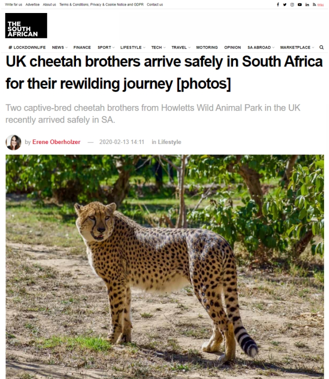 The-South-African-UK-cheetah-brothers-arrive-safely-in-South-Africa-for-their-rewilding-journey-13-Feb-2020.