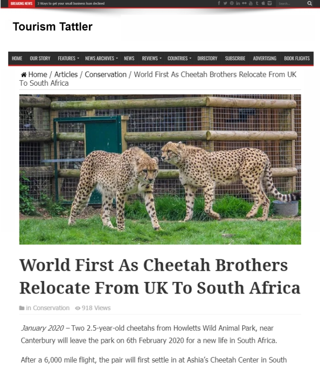 Tourism-Tattler-World-First-Cheetah-Brothers-Relocate-From UK-to-SA-Ashia